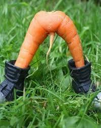 wortel unik