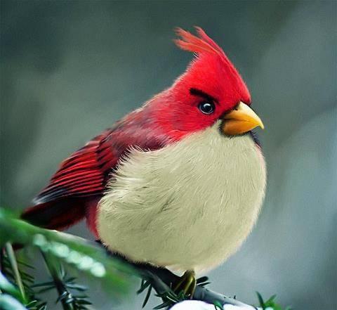 angry bird asli