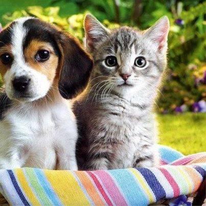 Lebih Pilih Mana Anjing atau Kucing ?