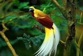 selamatkan hewan yg cantik ini dari kepunahan, dengan cara klik wow (Y)