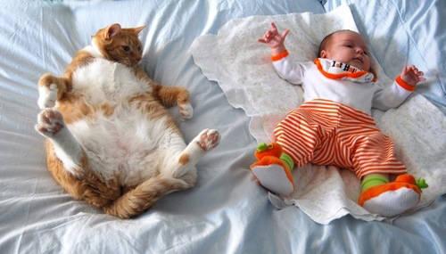 kucingnya gendut banget ya... ^^ dan kucingnya bisa menyerupai bayi juga...^^ lucu ya ^^ klik WOW ya!