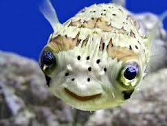 ikan yg lucu