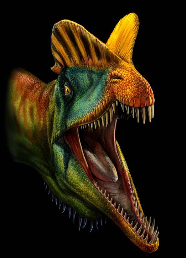 Dilophosaurus Name: »two-crested lizard« Length: 6 m Height: 1.5 m Weight: 500 kg Diet: carnivore Time: Jurassic (201-189 MYA) Location: North America, China (Asia)