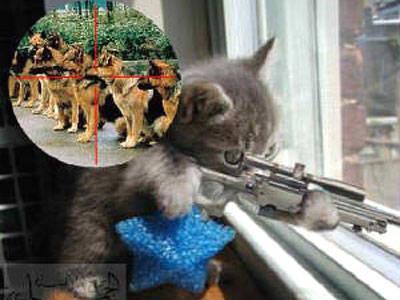 kucing ini bisa ngak ya menembak anjing itu ? jangan lupa wownya ya...:D