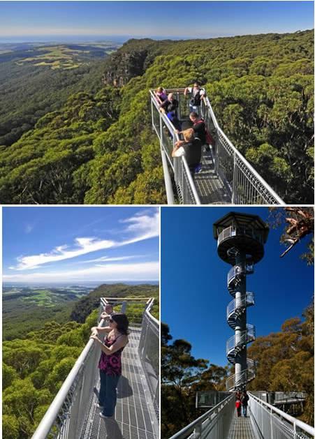 Illawara Fly Terletak di Knights Hill di atas tebing dekat Robertson di dataran tinggi selatan, Illawara Fly Tree Top Walk memfasilitasi pengunjung untuk berjalan-jalan di antara kanopi hutan hujan 25 meter di atas tanah di atas platform besi.