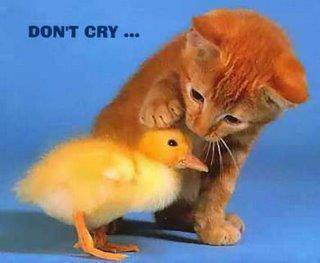 emmm, kucing manis yang lgi mengelus elus kpla bebek kecil, jangan sedih ya bebek .. :) :D