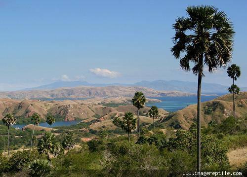 Taman Nasional Komodo (TN. Komodo) merupakan kawasan yang terdiri dari beberapa pulau dengan perairan lautnya. Pulau-pulau tersebut merupakan habitat satwa komodo (Varanus komodoensis) yaitu reptil purba satu-satunya yang tersisa di bumi
