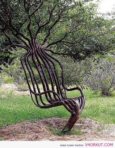 Keren neh pohon kaya bangku klo di rumah ada pohon kaya gini sepuluh aj kan jadi ngirit duit heheh XD