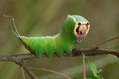 Alien Bug! Wahh, adakah yang mau memegang ulat selucu ini? Kalo mau memegangnya, klk WOW yaa!