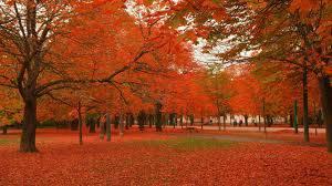 inilah keindahan alam saat musim gugur di jepang jangan lupa klik wow ya