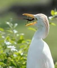 inilah kadal terkuat didunia,,,,, KADAL HERCULES,,hahahahah XD klo klian suka klik WOW-nya