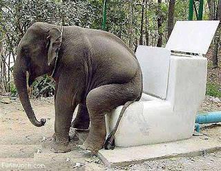 Ini neh gajah paling males okwokw ..!!!