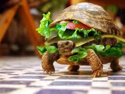 kraby turtle