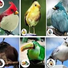 inilah burung asli gambar angry bird yang mana kamu suka