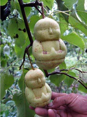 hayo siapa yang bisa tebak ini buah apa?????tapi jangan lupa WOW nya ya