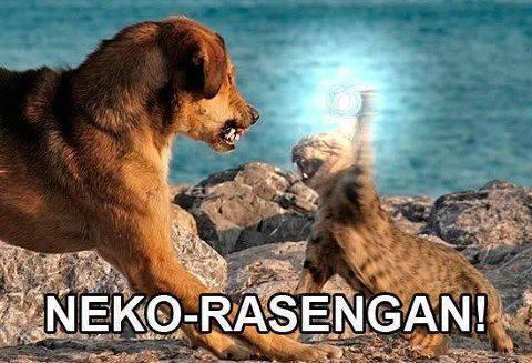 hahahaha kucing jga bisa rasengan !!