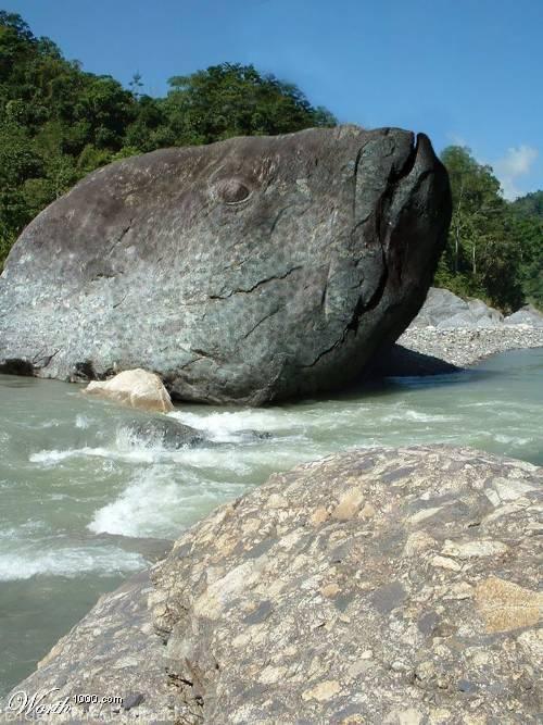batu besar yg terdapat di wilayah toraja yg menyerupai kepala ikan mas.