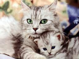 kucing aja sayang banget ama anak nya apa lagi kita lebih di bela di sayang sama orang tua kita kasih sayang hewan dan manusia sama ........ mana wow nya