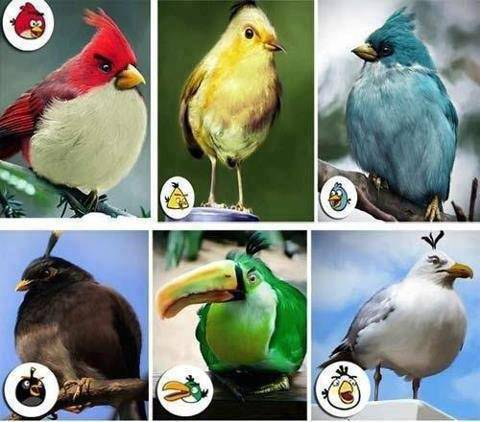 Hallo Sahabat Pulsker kali ini aku bawakan gambar loh Waw ternyata Angry Bird ada yg asli yah jangan lupa Wownya ya