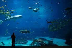 WOW!!! Aquarium terbesar di dunia... Nama aquarium ini adalah Georgia Aquarium. Letaknya di Georgia, Atlanta, Amerika Serikat