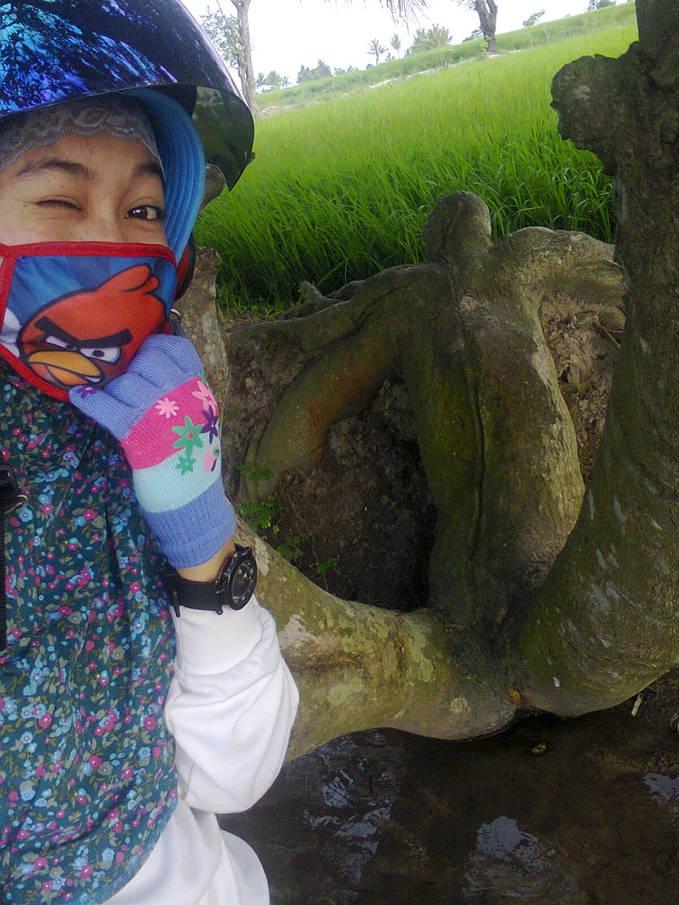 Pohon pasrah......dekat rumah cuuuuuyyyyyy............Bukti Kebesaran ALLAh....