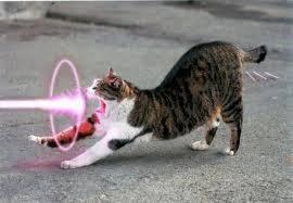hahah ada yg punya kucing ini gk klik wow ya