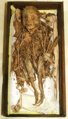 Misteri Setan Terbang Dari Jepang Mumi itu memiliki kepala manusia, namun memiliki kaki dan sayap berbulu seperti burung. Tengu yang telah menjadi mumi ini dipercaya berasal dari kota Nobeoka (perfektur Miyazaki) di Jepang Selatan.