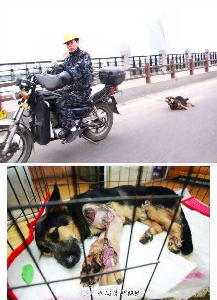 Orang ini Mengikatkan rantai sepeda motor ke kalung seekor anjing Lalu menyeretnya, ini merupakan perbuatan kelompok anti hewan di cina kabarnya di kota guangzhou, kelompok ini dinamakan tidak manusiawi-dalam bahasa harafiah dan pengambilaan