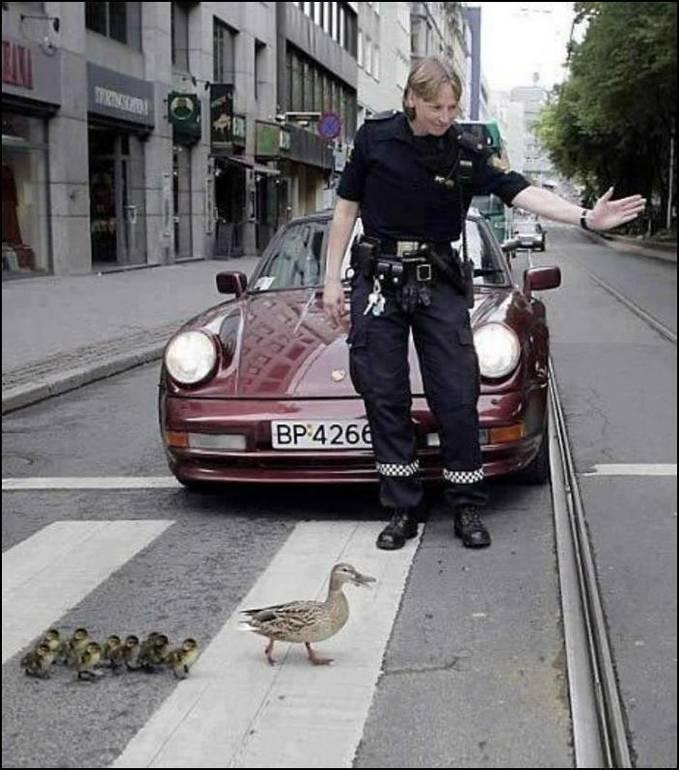 Jika binatang di perlakukan sama seperti manusia, teman-teman plusker setuju gak ya..^_^