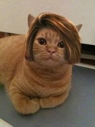 kucingnya modis banget B)