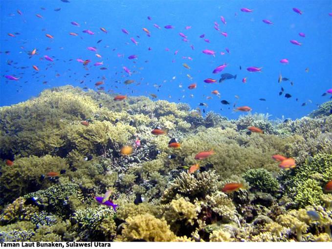 Indonesia itu mempunyai banyak potensi keindahan alam yang sangat luar biasa (Taman Laut Bunken, Sulawesi utara) bagi yang cinta Indonesia click wow nya dong :D
