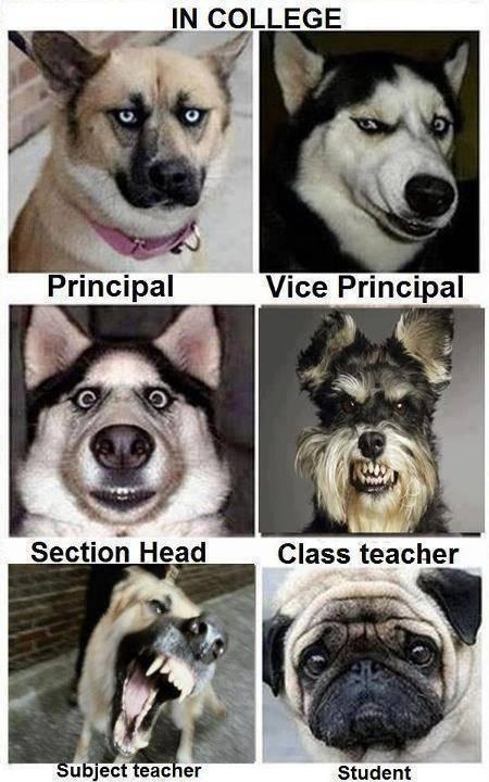 ini berbagai ekspresi wajah anjing tolong wownya donk