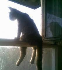 ini tanpa sengaja saya fhoto Gan... mana ada kucing normal seperti ini, mungkin kucing jadi-jadian gan... harus bilang WOW gitu....