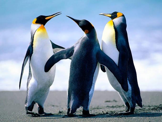 wowwww,!!! pinguin bersahabatan di kutub utara !!!!!