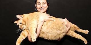 Sponge Bob, 9, memiliki berat 15 kg atau sama dengan anak berusia empat tahun. Kini ia melakukan diet ketat dan latihan kebugaran di penampungan hewan. Para staf di Animal Haven di New York membantunya berolahraga