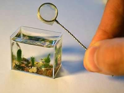 aquarium terkecil di dunia WOW, ikannya pasti itu kecil ya