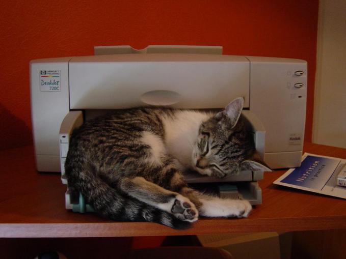 Printer 3D terbaru! keluarnya kucing beneran.. hihi