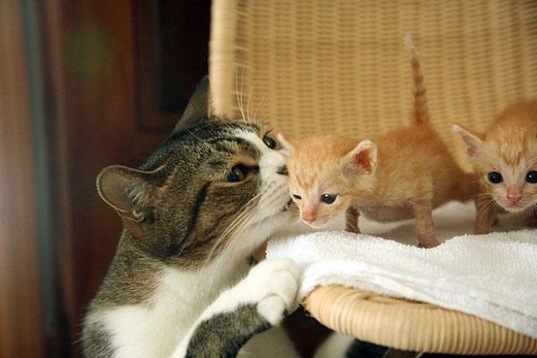 bunda mau cari mam dlu ya nak.. ~ kiss..