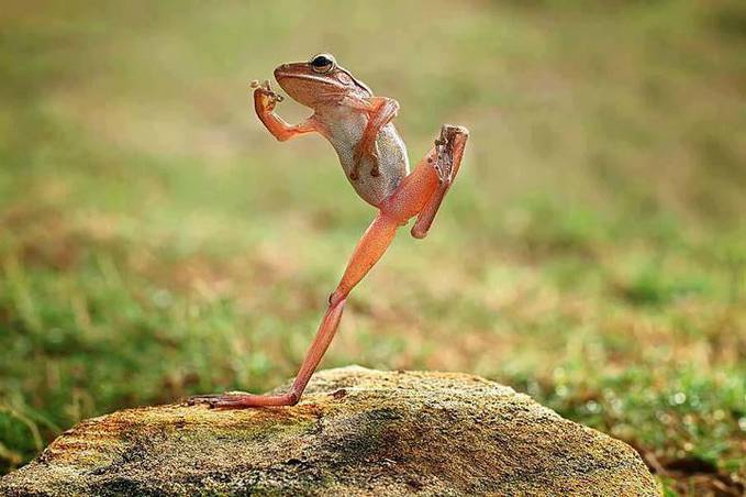silat froggg.. :D