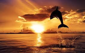 wah pemndangan sunset klik wow y