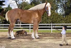 Mu JaLan-Jalan Dulu Naik Kuda Mna Ya...?? Yg Gedeh Apa Yang Kecil Yang Mana Yah...Pilih Yang Lariya KenCeng Aja Kyak Yah,.,.Kalian Jangan Tiru Aku Yah AKu Dah Joki ya Lo.........Hihi,.,.,