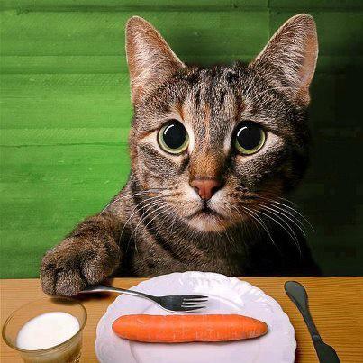 Miaw... Mama... kapan aku boleh makan... Laper nih... >_