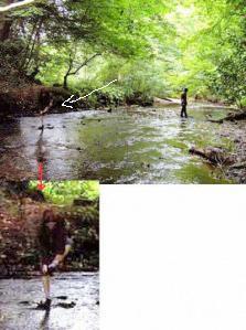 sesosok bayangan yang sedang mencuci kaki di atas air dan diambil oleh Jamie Whitehead di hutan Saltburn Wood Inggris. Orang-orang yang skeptis mengatakan itu hanyalah bayangan dari ranting pohon