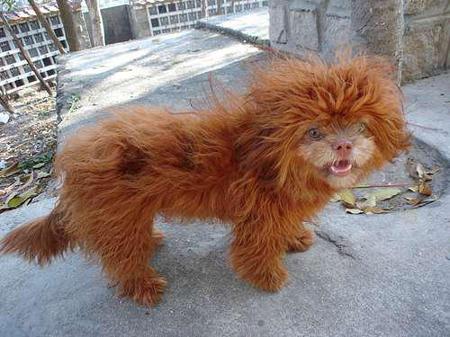 Gambar Lucu - Kucing atau Anjing ? Hayo Tebak