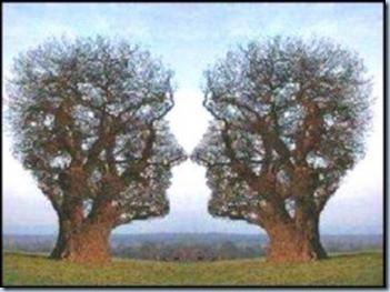 Kalau kita amat amati pohon ini seperti kepala manusia yang sedang berhadapan ya kawan ??? :/ #WOW nya jangan lupa :D