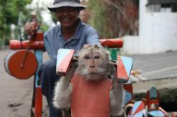 Asal mula nama Sarimin dalam kisah Topeng Monyett !!