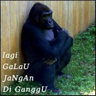 lihat ni gorila lagi galau yang lucu bilang wow