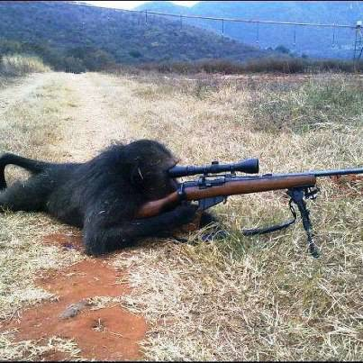 sniper ....