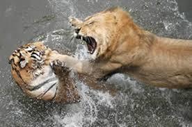siapa yang setuju kalau singa yang menang... kalo ada yang setuju tolong klik WOW...:D