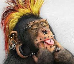 Baru ngeliat Monyet Punk...!!!!!